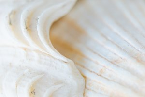 Abstract Seashell background