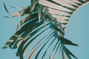 Palm leaf. Tropical vibes.