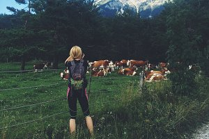 Hiker photographing cows on meadow