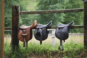Three horse saddles