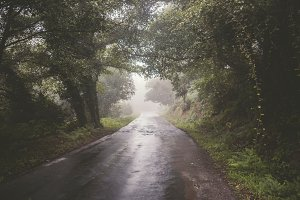 Rural road on a foggy day.