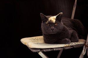 Rockstar Cat