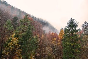 Murky Autumn Landscape & Forest