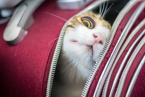 Cat in a trolley bag