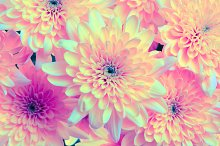 Flower background. by  in Abstract