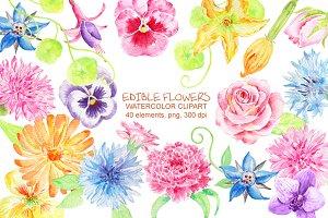 Watercolor Edible Flowers Clipart