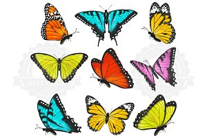 Set of colorful butterflies vector