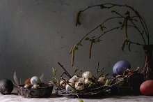 Quail Easter eggs in nest by  in Holidays
