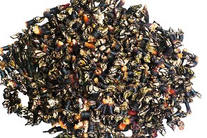 fresh goose barnacles Galicia
