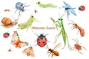 Watercolor Insects and Spider