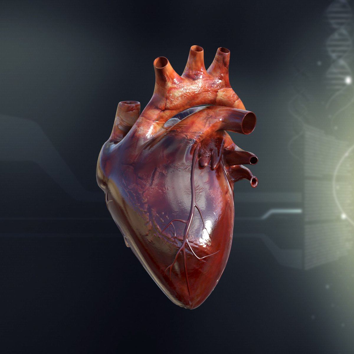 Human Heart Anatomy ~ 3D People Models ~ Creative Market
