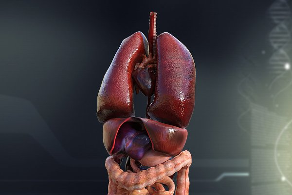 3D Characters: Digitallab3d - Human Male Internal Organs Anatomy