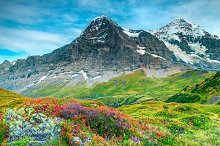 Alpine flowers and high mountains by  in Nature