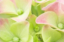 Spring flower pastel background by  in Holidays