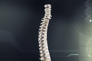 Human Spinal Anatomy