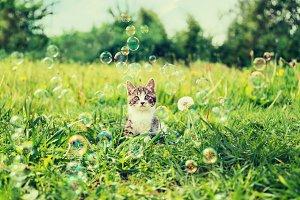 Kitten among soap bubbles