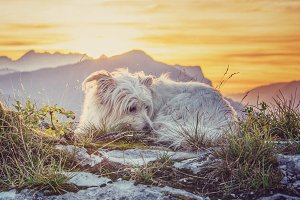 Dog resting on the top of the hill