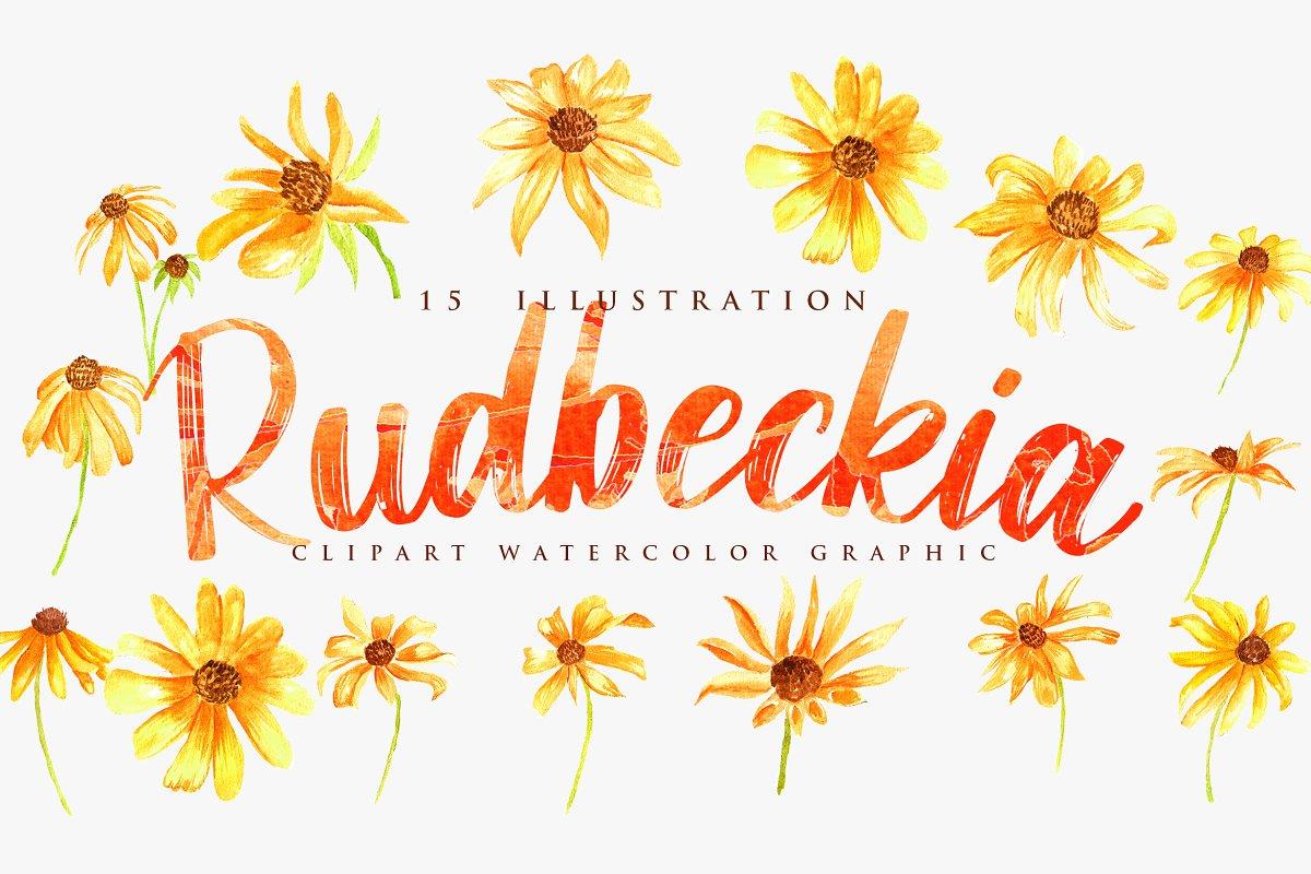 15 Watercolor Rudbeckia Illustration