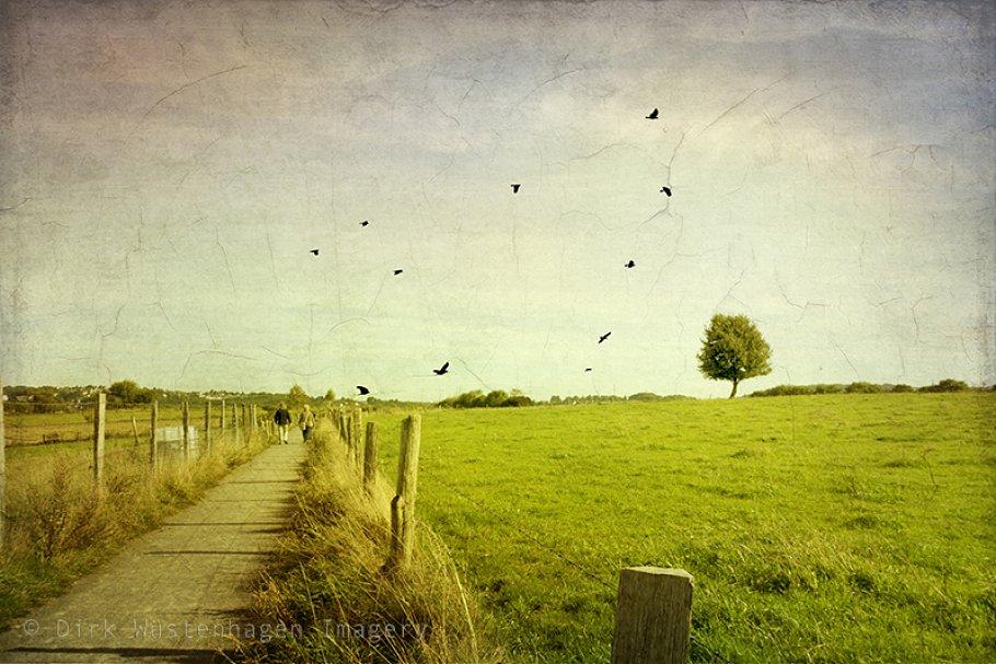 Bird Brushes - A Sky full of Birds