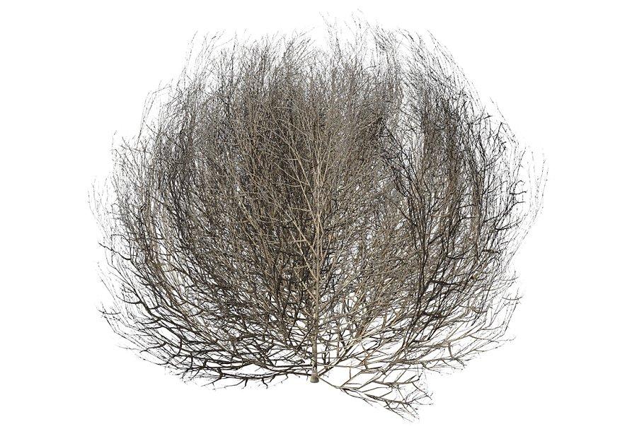 Tumbleweed LOW