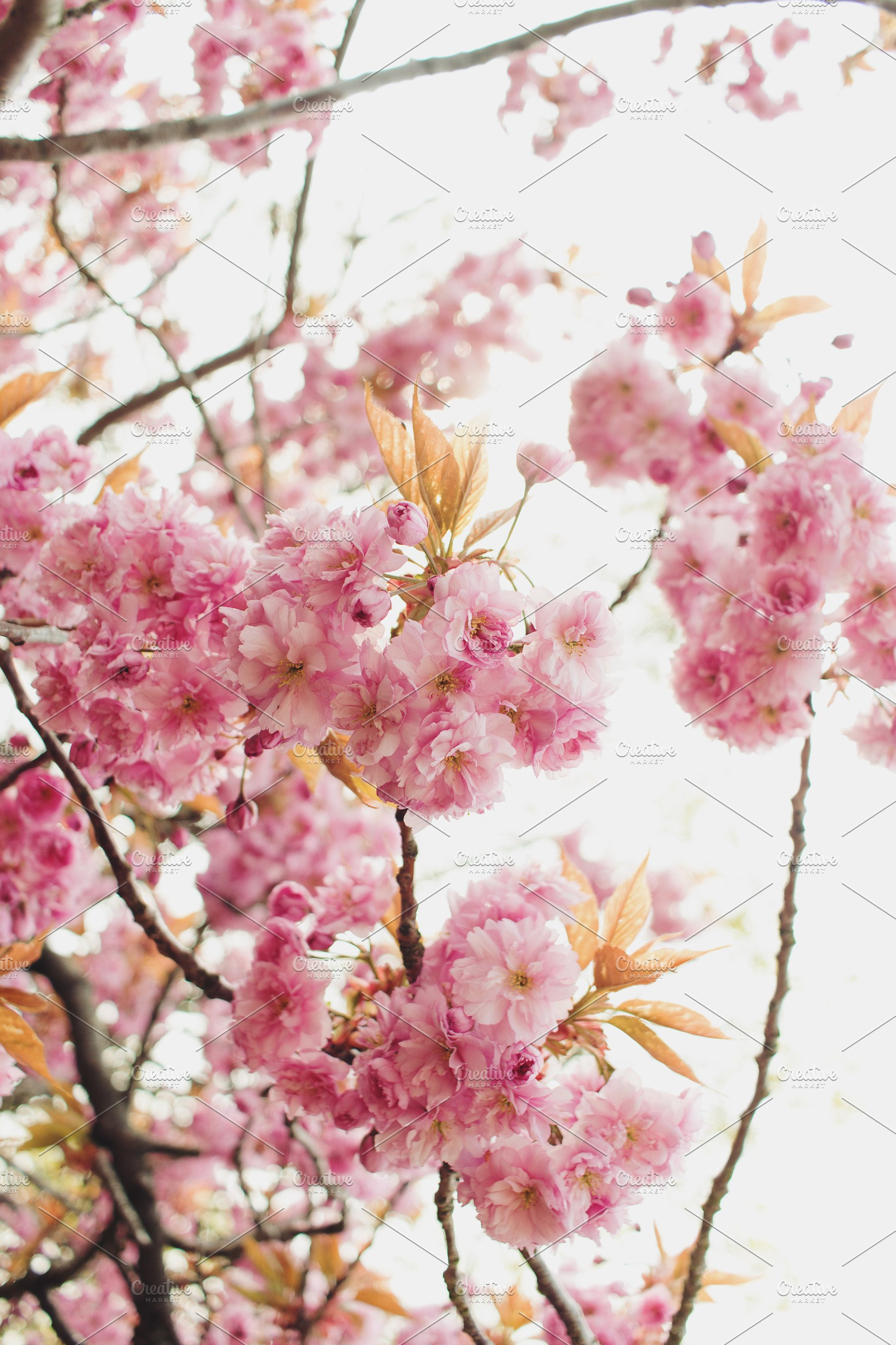 Pink Flowers In Spring High Quality Nature Stock Photos