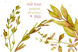Watercolor spices vector hand drawn