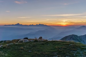 Sheeps in mountains at sunset