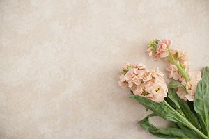 Blush Floral on Marble