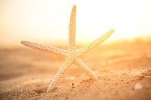 Close-up Starfish On Sand by  in Animals