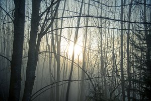 Misty sunrise in the forest