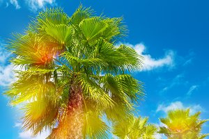 Palm trees with sunny blue sky