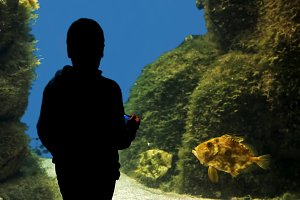 child observing fish at the aquarium