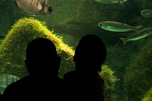 father and son at the aquarium