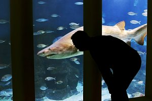 man looking a shark at aquarium