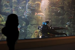 professional diver cleaning aquarium