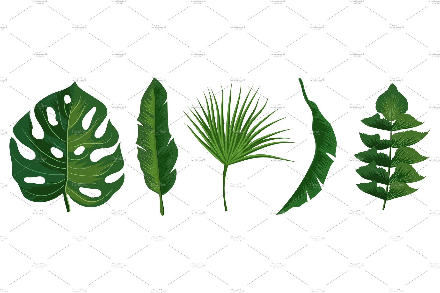 Tropical Exotic Leaves Vector Pre Designed Vector Graphics Creative Market Tropical looking plants (exotic plants that make you believe you are in the tropics). tropical exotic leaves vector