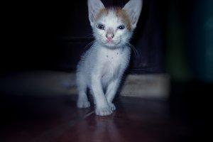 Kitten sad