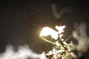 Flowers glow