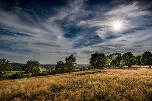 Summer landscape...