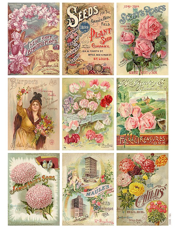 Antique Flower Seed Packet Collage