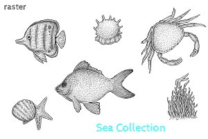 Sea Collection