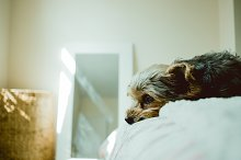 Sweet Little Dog by  in Animals