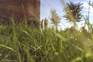 Low angle view through grass