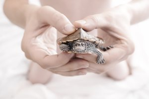 Hands holding turtle.Selective focus