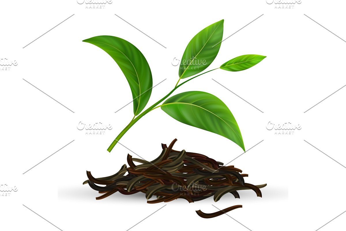 Fresh And Dry Vector Green Tea