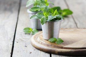 Green fresh mint