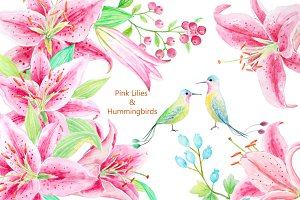 Watercolor Pink Lily &Humming Birds