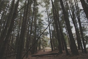 Man in Pine Forest 2