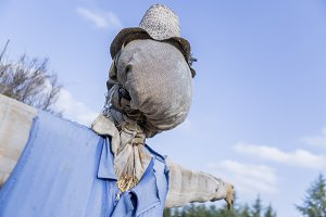 scarecrow at the garden