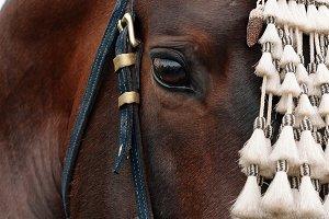 Horse close up. Fair of Seville.